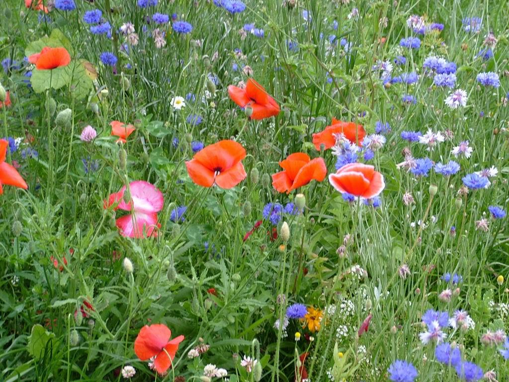 شم النسيم Blue-red-orange-field-flowers