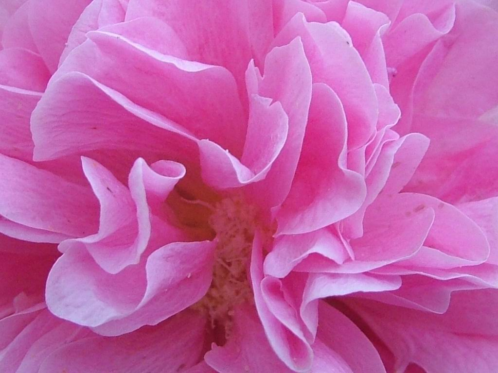 7art flowers screen saver 40 flowers images all images are