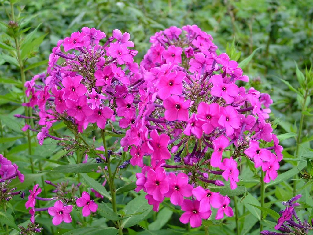Pink Garden Flowers Image Collections Flower Decoration Ideas Gallery Little