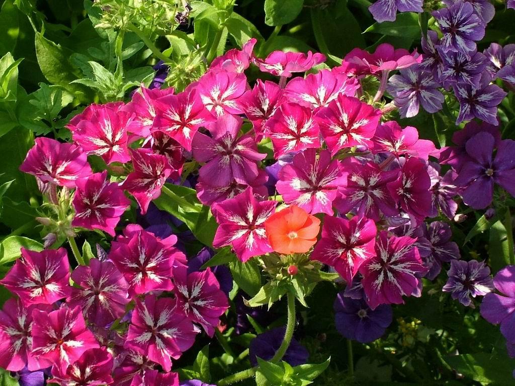 7art Flowers Screensaver Amazing Flowers In Beautiful Screensaver