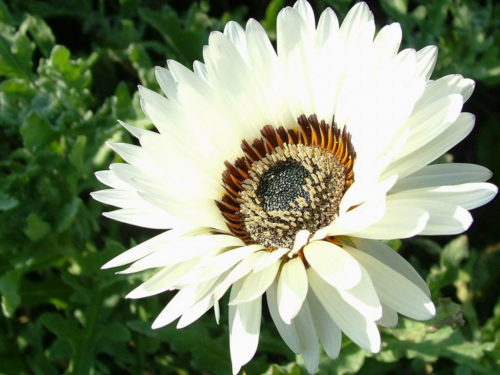 art flowers screensaver. amazing flowers in beautiful screensaver., Beautiful flower