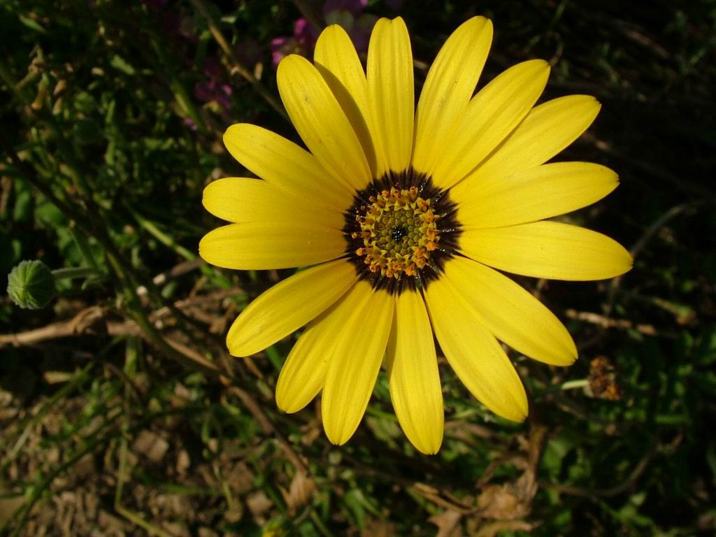 yellow flower pictures - photo #31