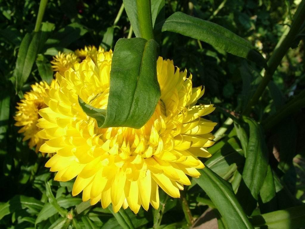 7art flowers free screensaver amazing flower images in a slideshow ravishing yellow flower mightylinksfo