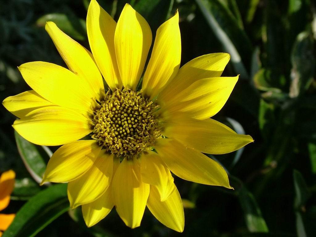 7art flowers free screensaver Amazing flower images in a slideshow screensav