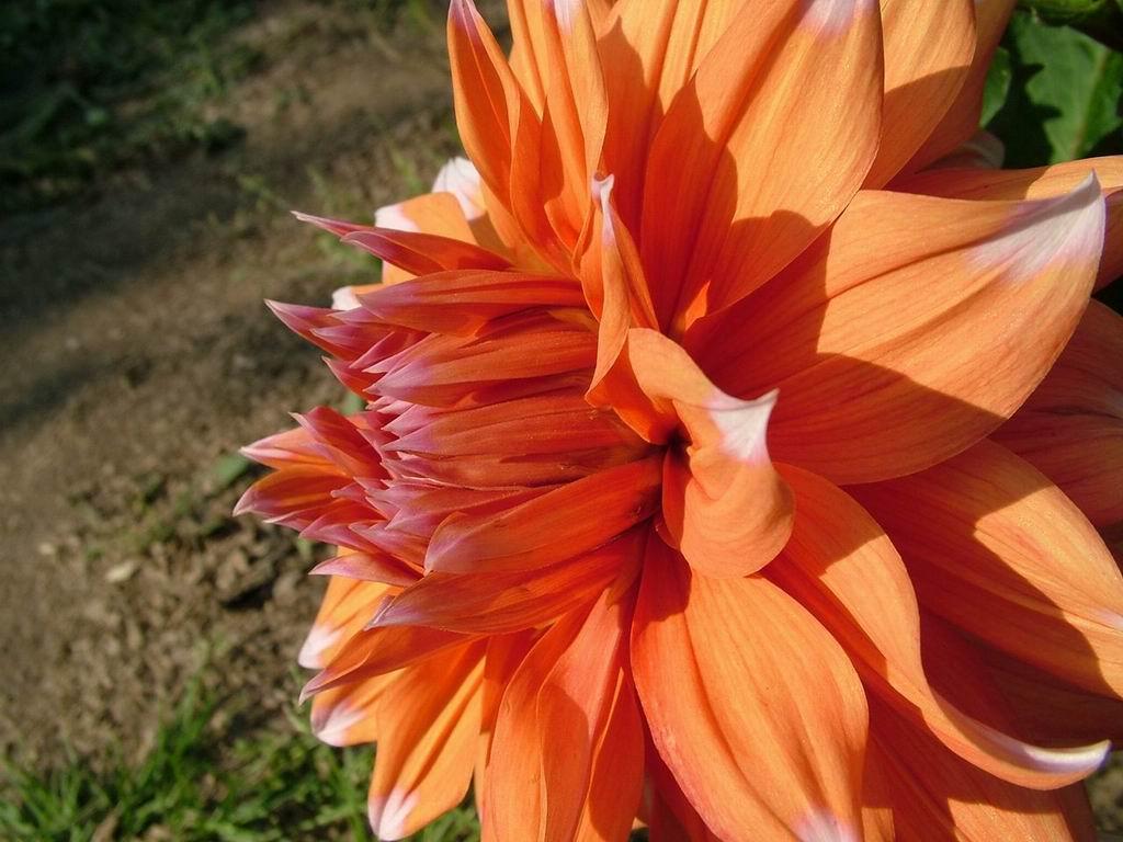 Big Flower Beautiful Flowers