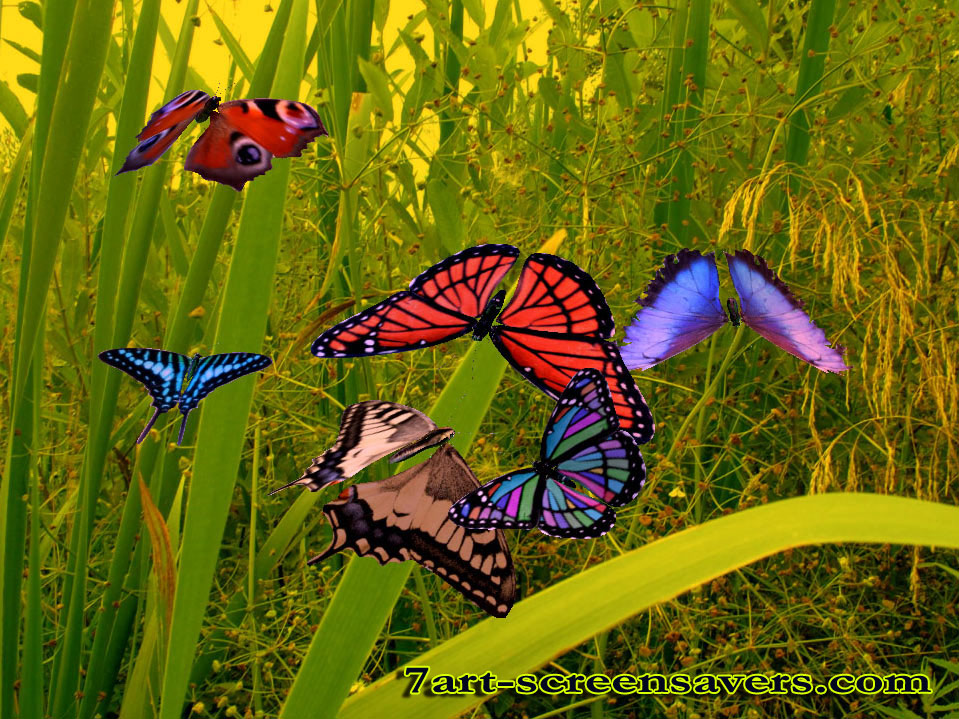 animated butterfly clipart. 3D Amazing Butterfly