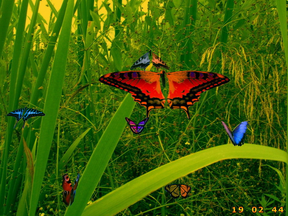 Amazing Butterflies screensaver screenshot