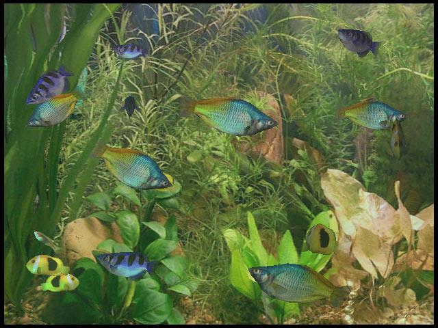 Dolphin Aqua Life 3D Screensaver 3.1.0