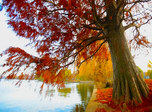 Autumn Willow Pond screensaver and live animated wallpaper for Windows and Android