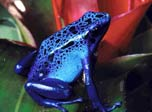 Lovely Frogs and Toads in amazing slideshow