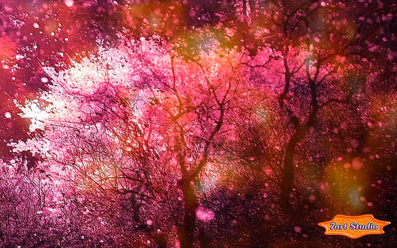 Cherry Blossoms Spring Wind Screensaver Amp Animated Desktop
