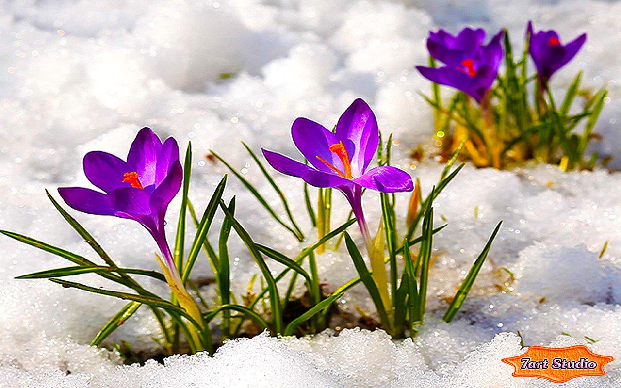 spring flowers screensavers - photo #23