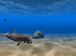 Dolphin Screensaver - Free downloads and reviews - CNET ...