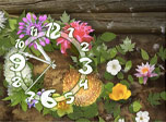 7art Flowers Clock screensaver - Join glorious Flower Parade for festive mood!