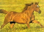 Graceful Horses screensaver download