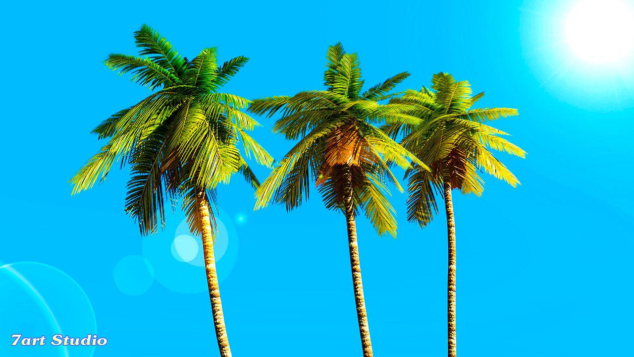 Pin free screensaver palm tree on pinterest - Free palm tree screensavers ...
