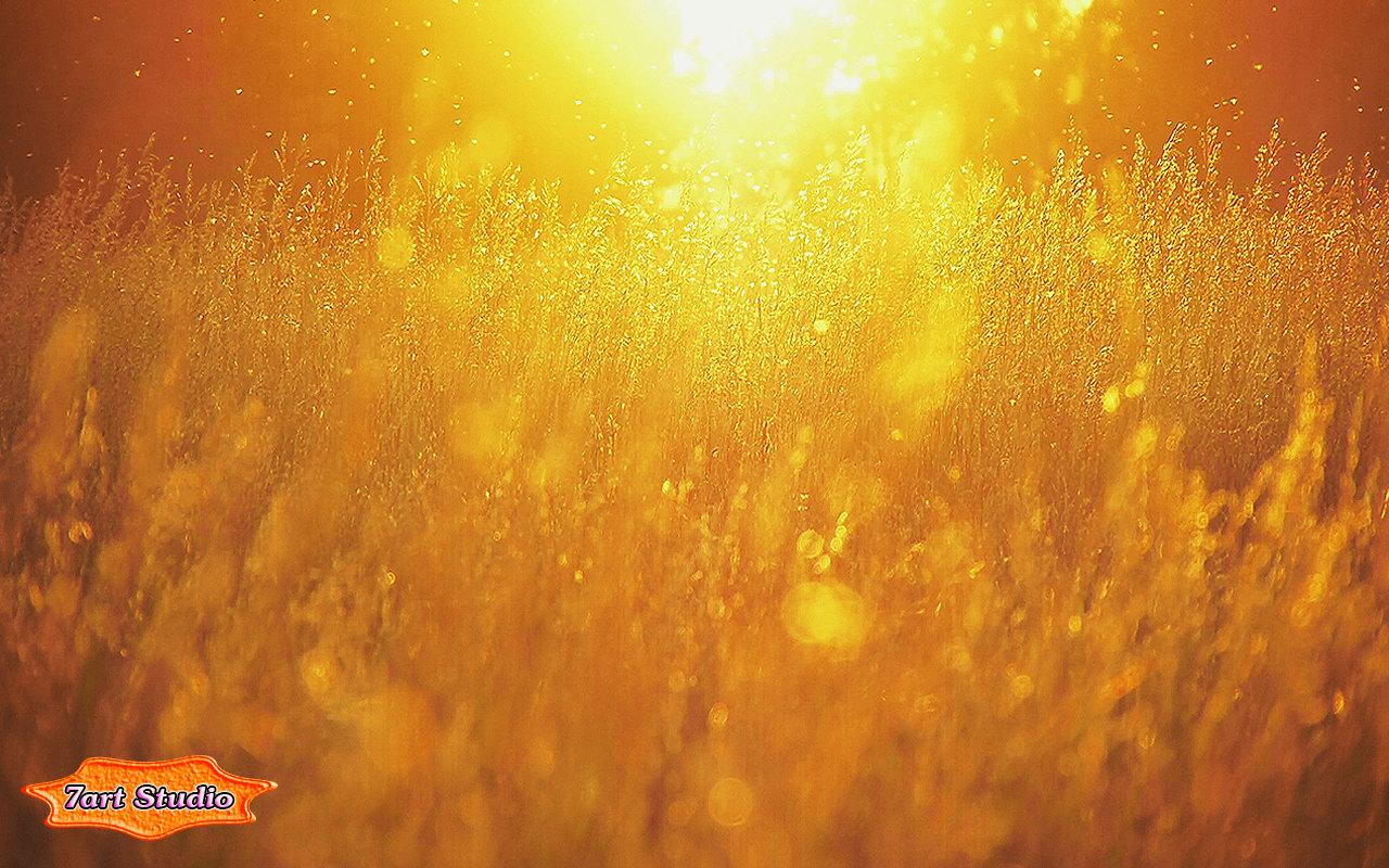 nature sunset field screensaver & animated desktop wallpaper - sunny