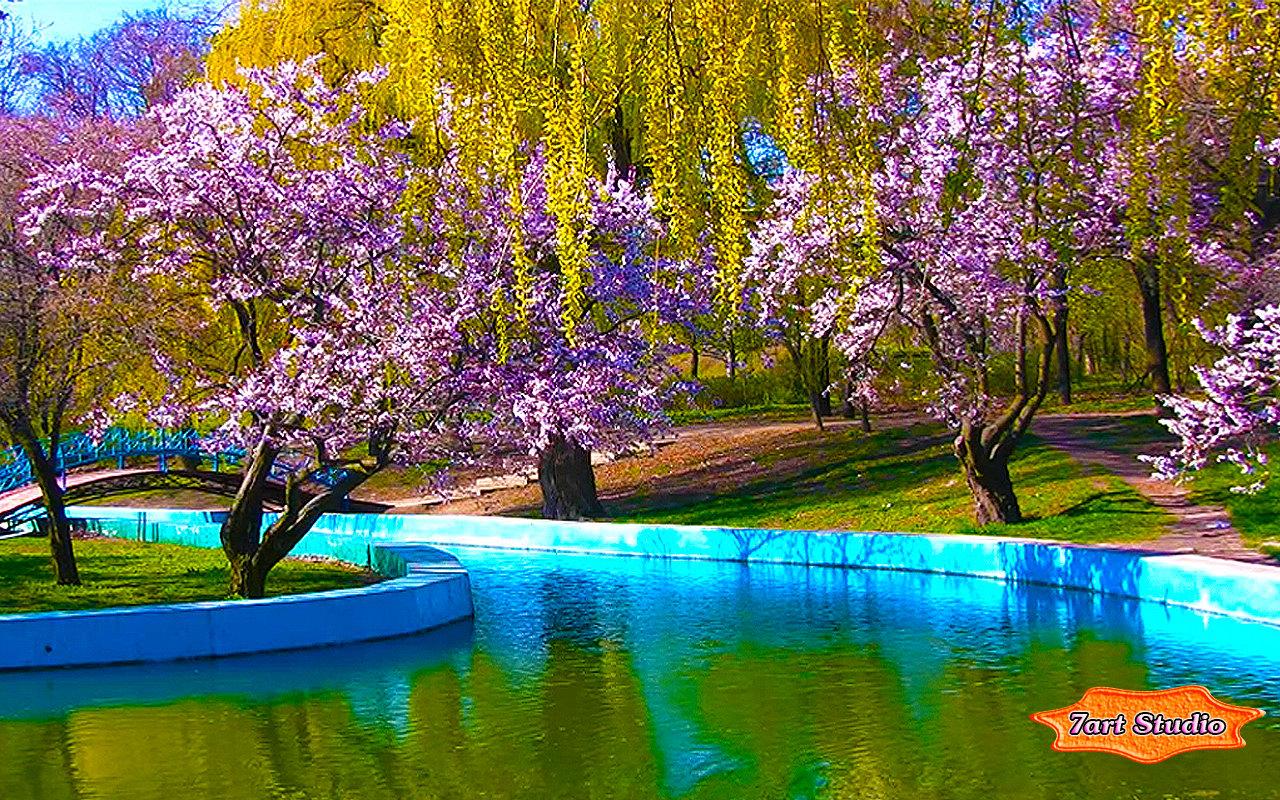 Spring Park Sakura Blossoms Screensaver Amp Animated Desktop