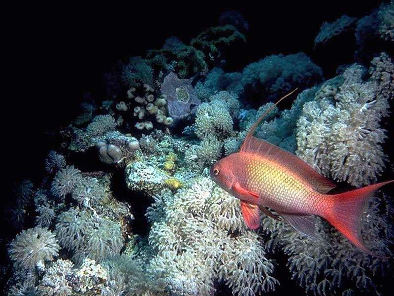 Aquarium fish screensaver unique things life for Cool pet fish