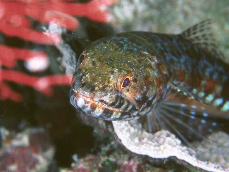 7art tropical fish screensaver magical fishes in for Wings fish