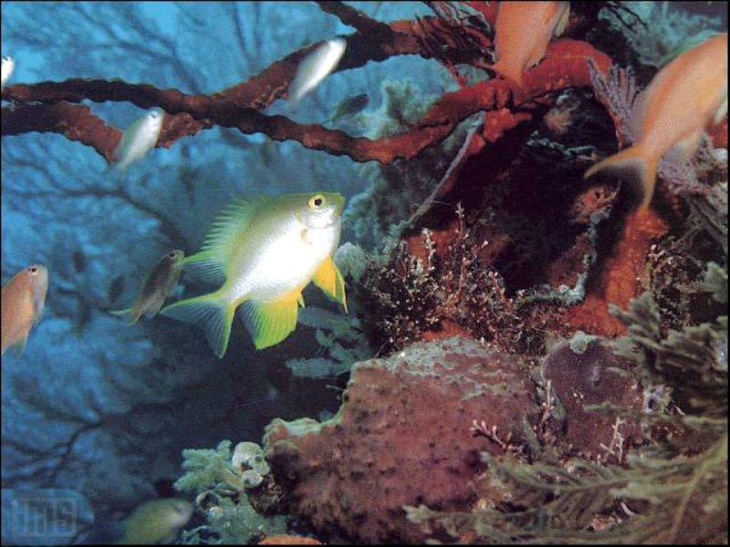 7art Tropical Fish Screensaver Magical Fishes In
