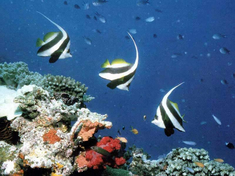 tropic fish - photo #29