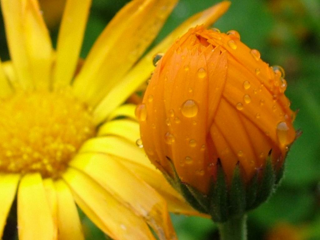 wet flowers after rain screensaver and wallpaper manager download