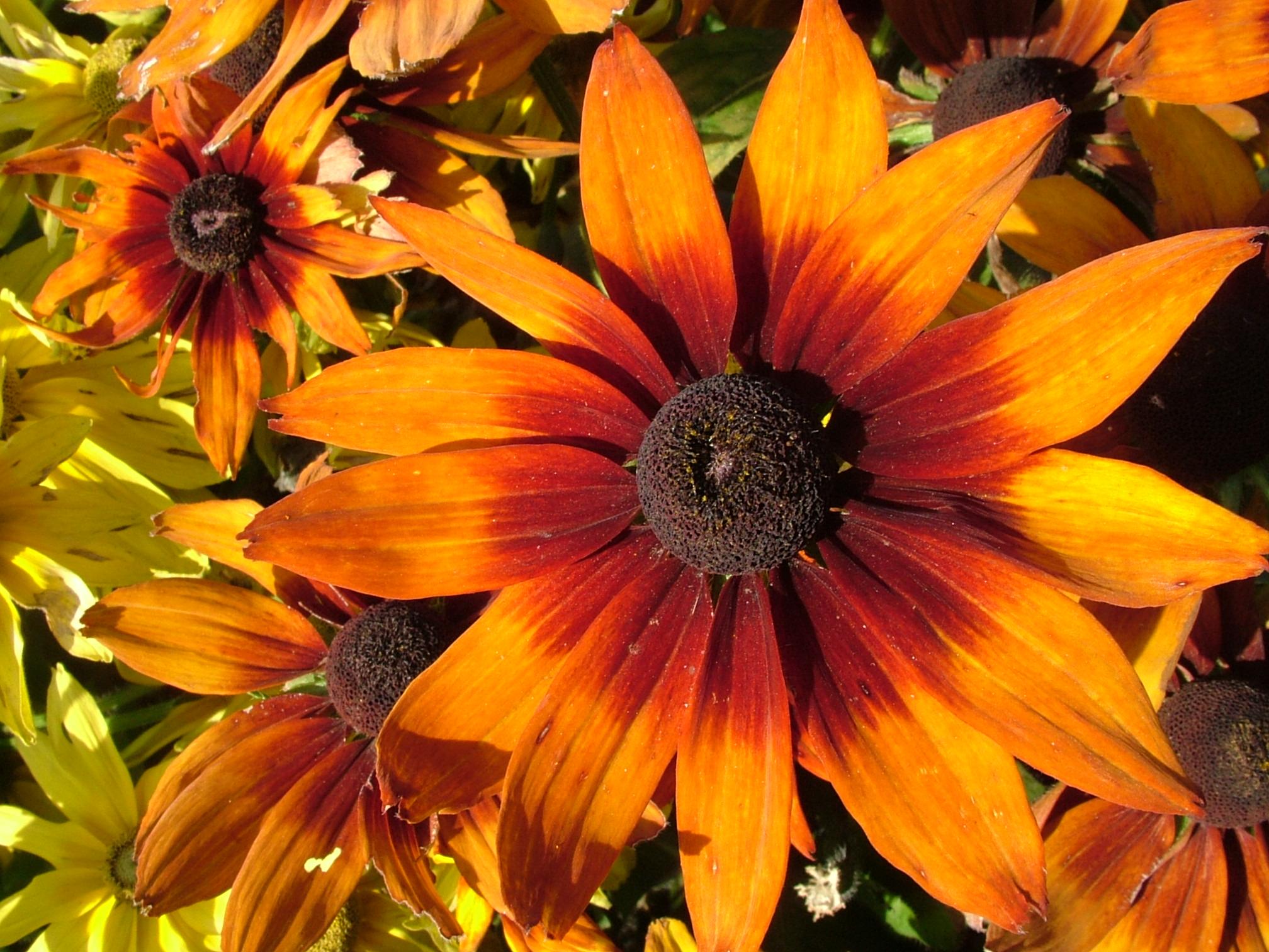Каталог садовых цветов с фотографиями и названиями