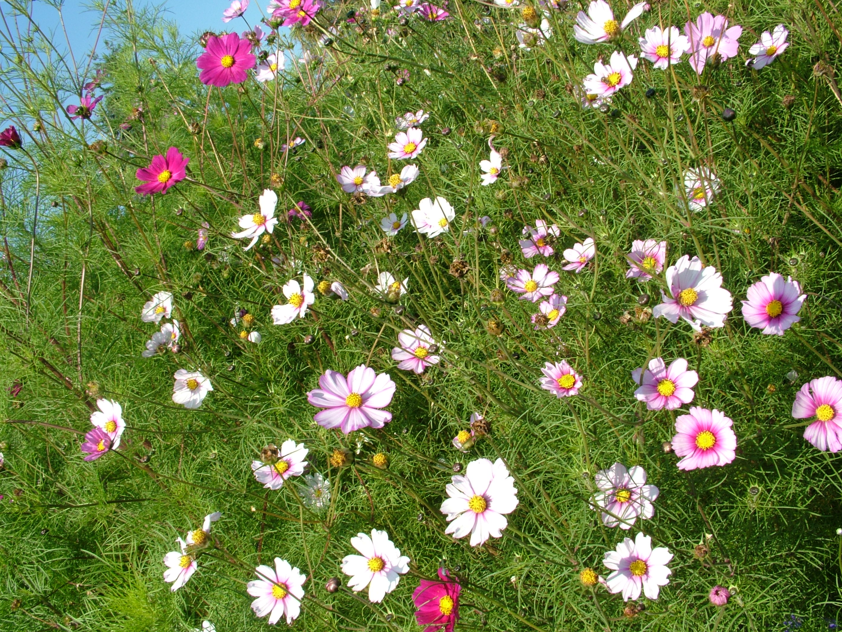 Click this image to download full resolution grass-flowers photo free ...