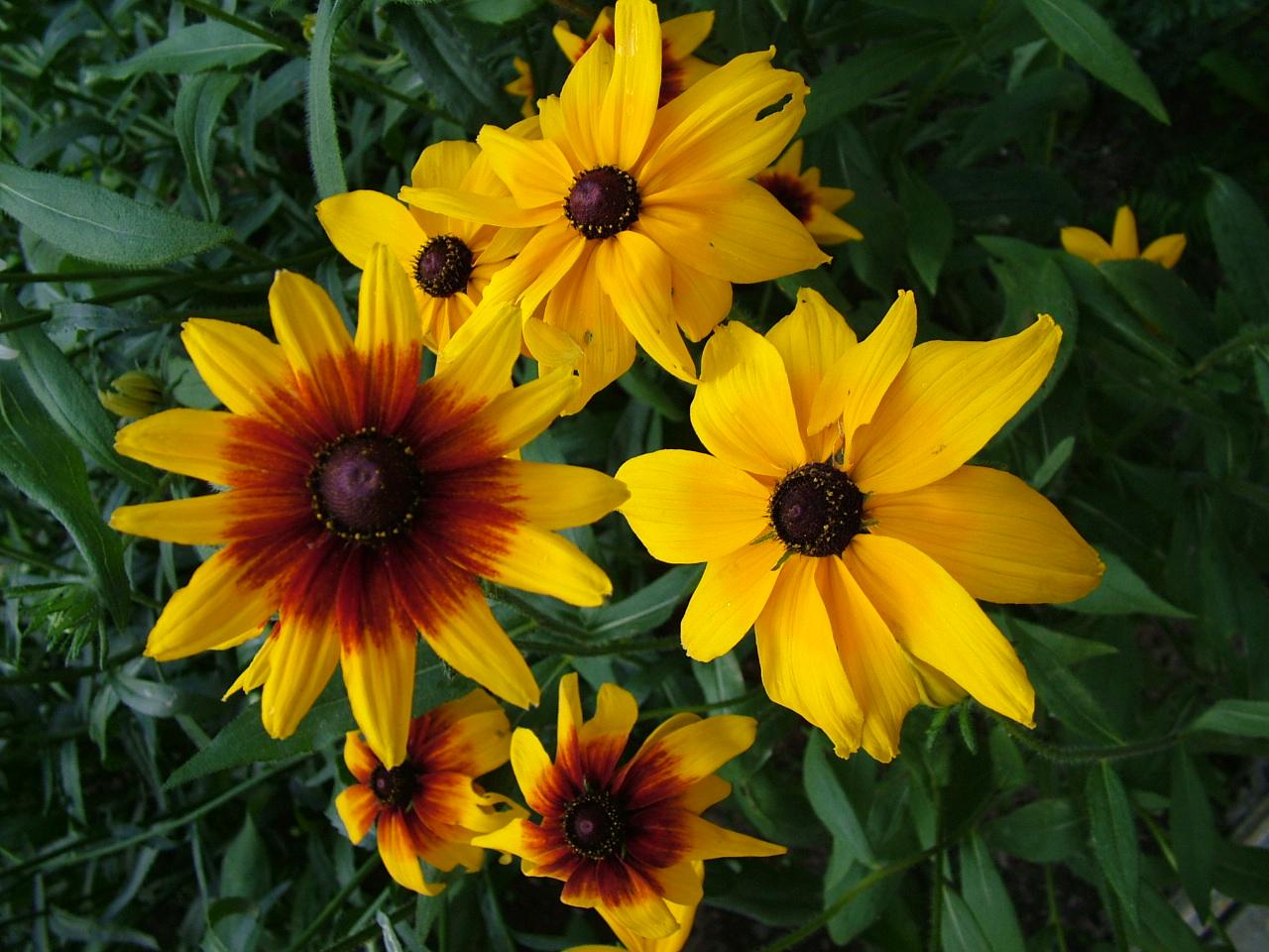 Index of wallpapersflowers 4xls yellow brown flowersg mightylinksfo