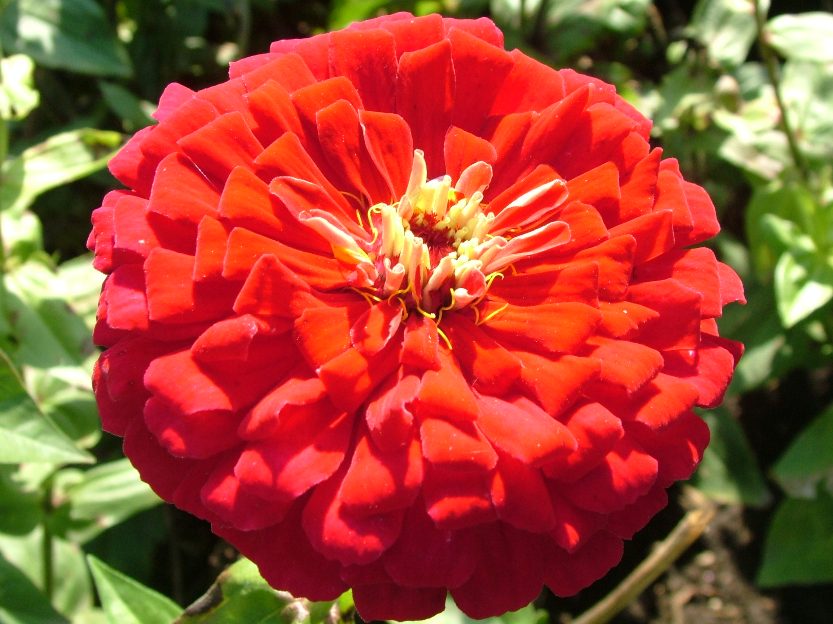 Bright Red Flower Image In Hi Res