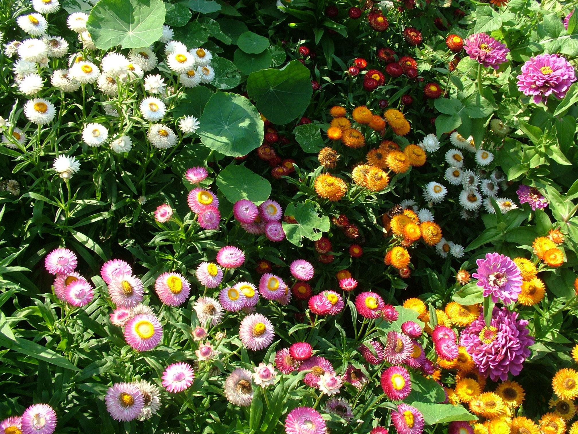 Каталог всех садовых цветов и названиями по алфавиту