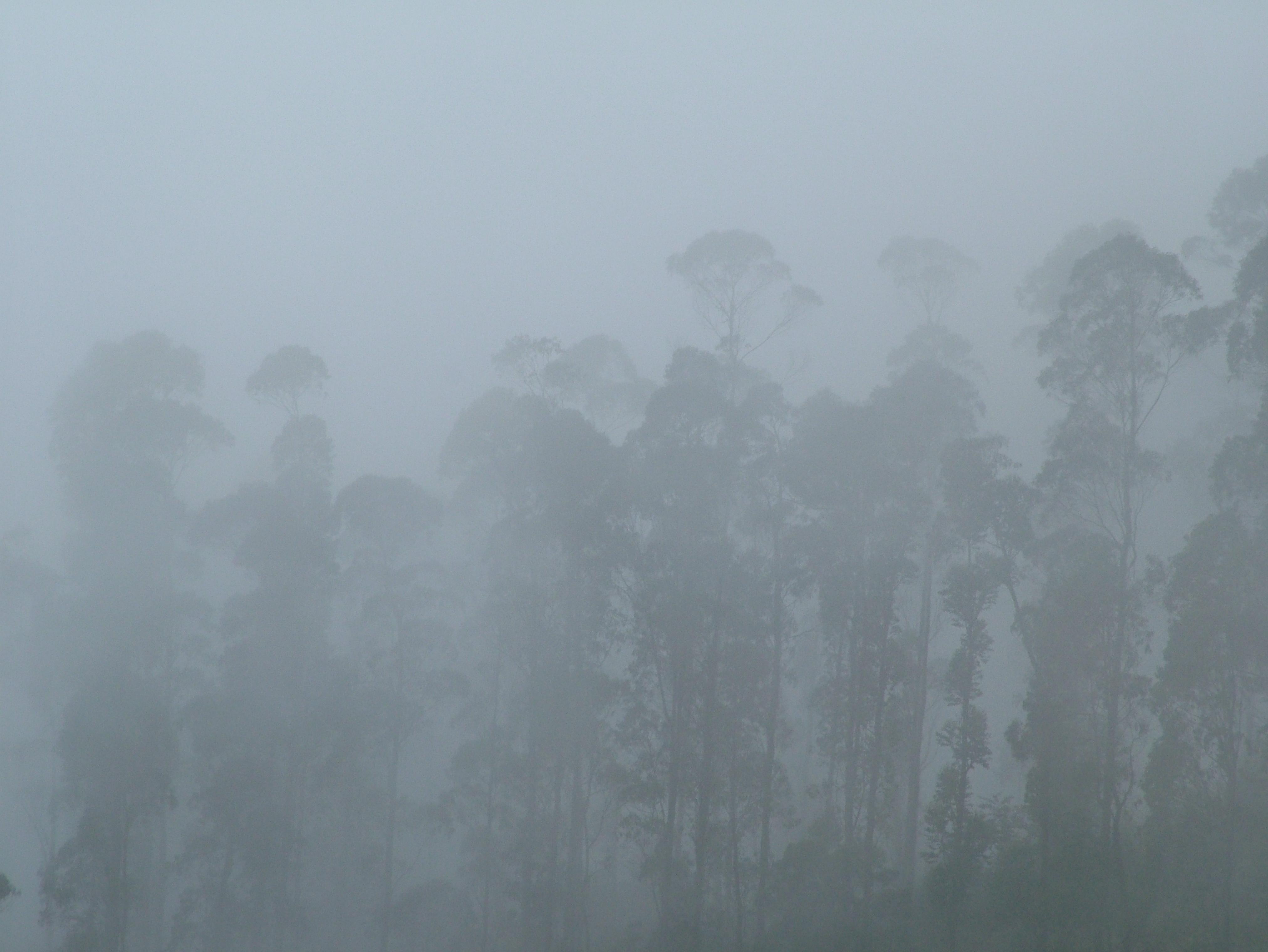 Avatar for The mist spirit