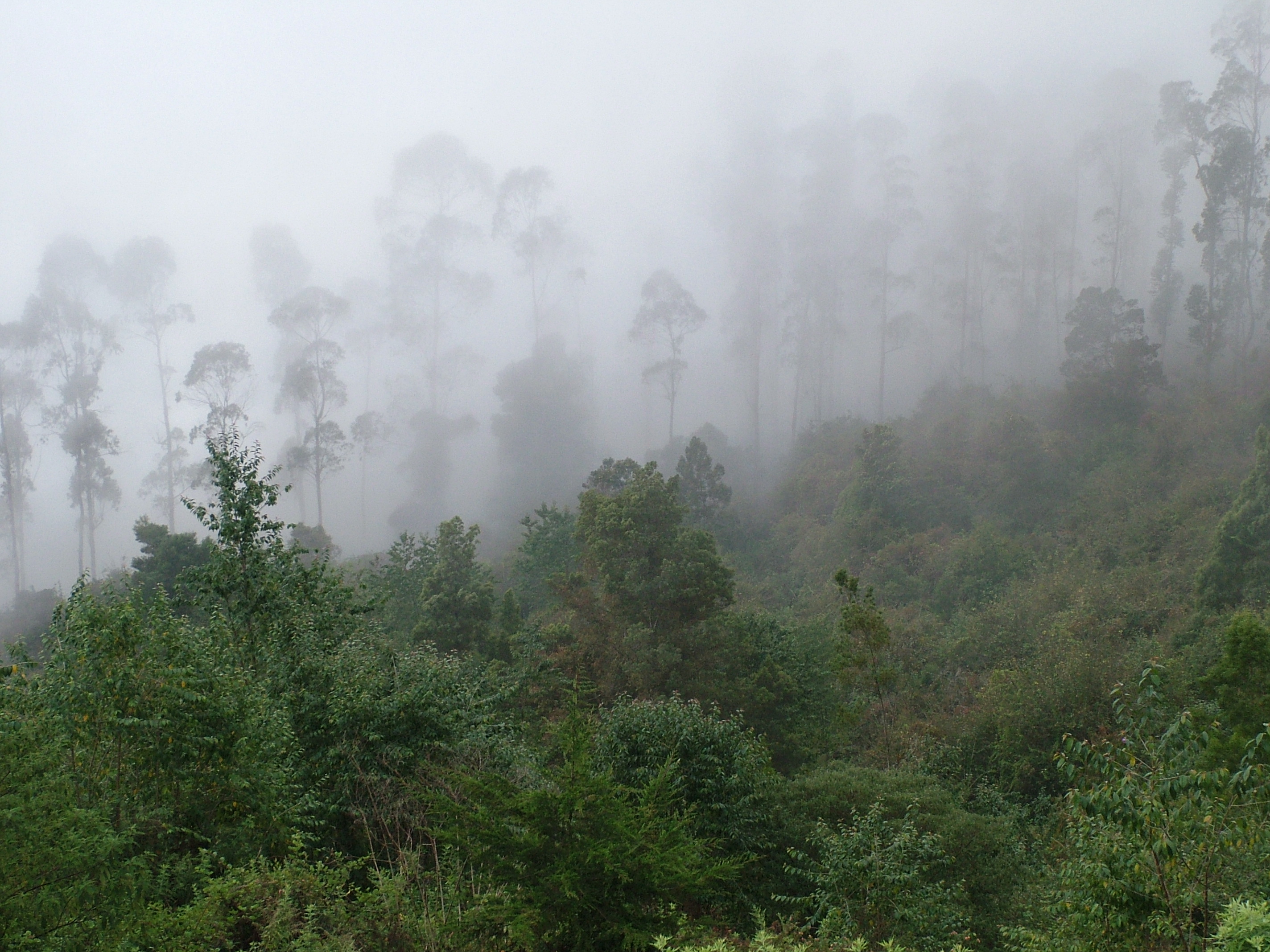 Free stock photo of clouds, fog, forest