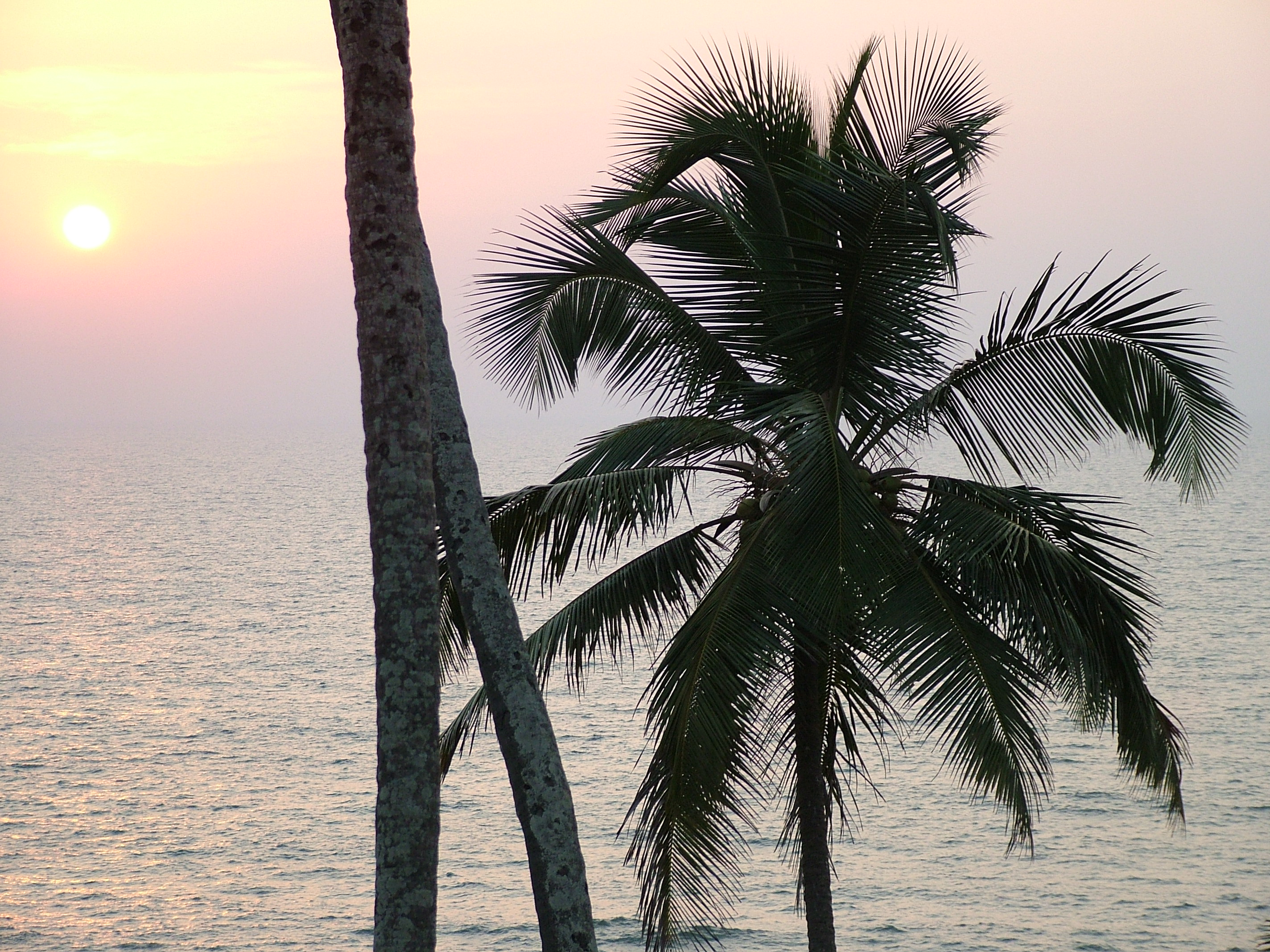 Free 7art trees clipart and wallpapers royalty free evening sun palm stock photo - Free palm tree screensavers ...